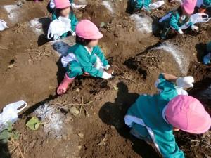 芋掘り-2